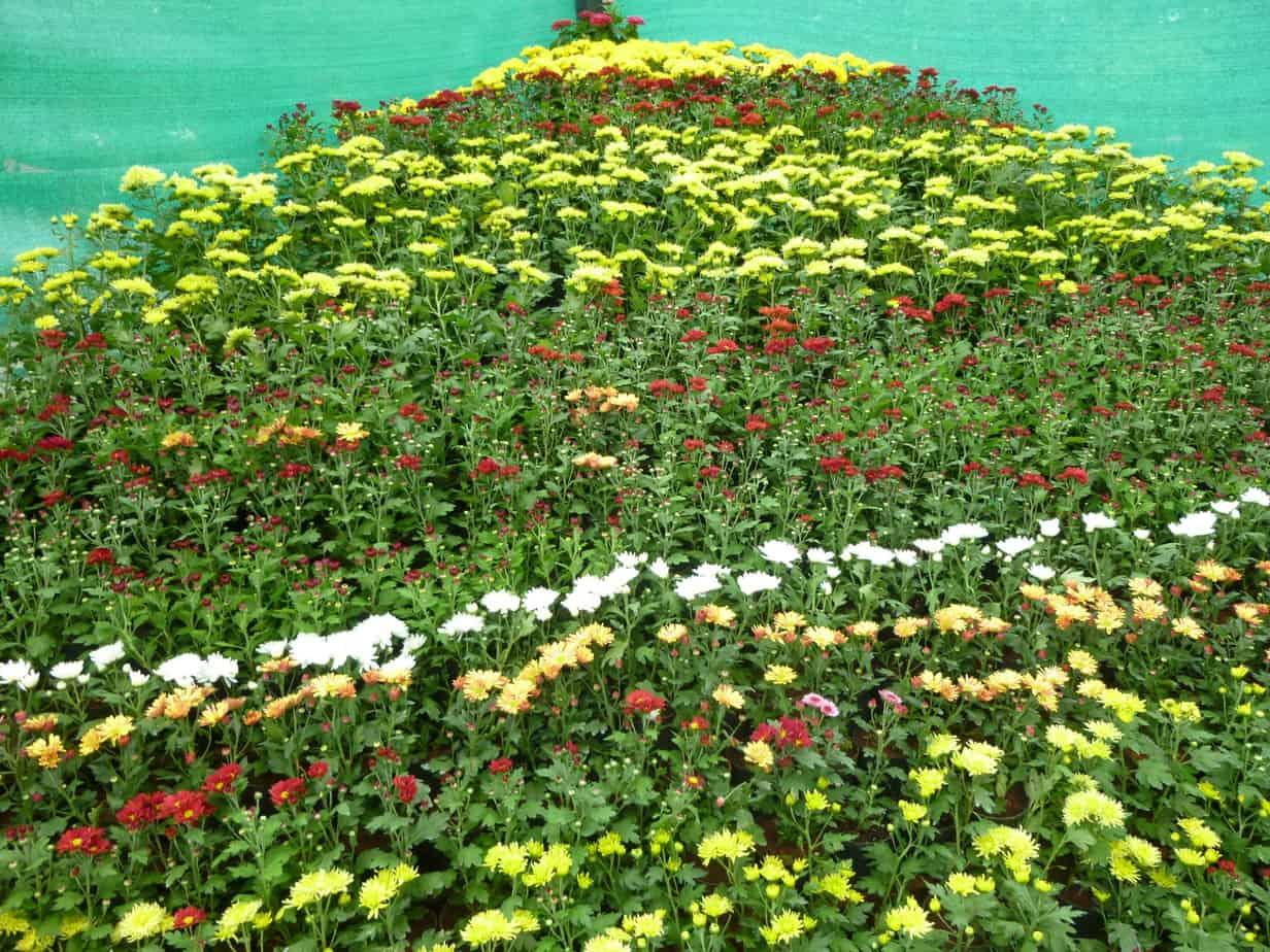 A floral corner