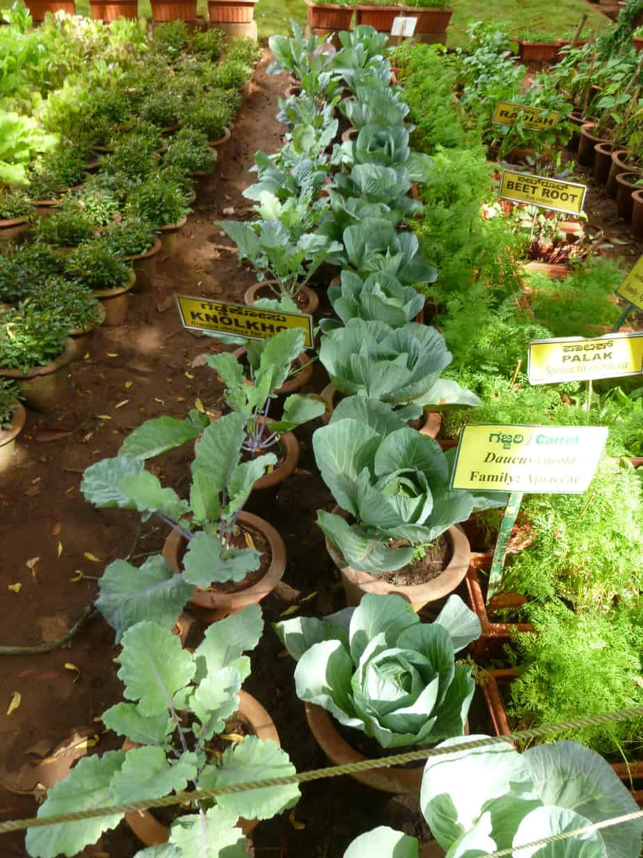 vegetable plants on display at the horticulture show.